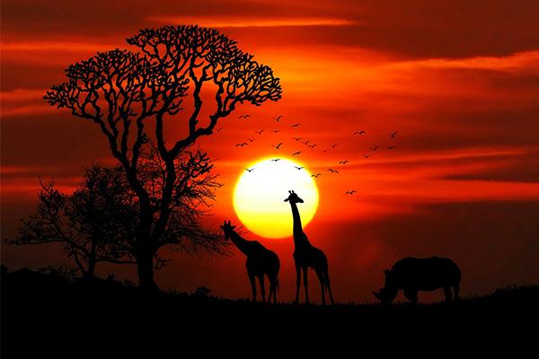 Désir de littérature - L'Afrique